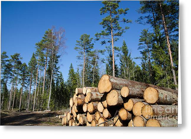Timber Stack Of Whitewood Greeting Card