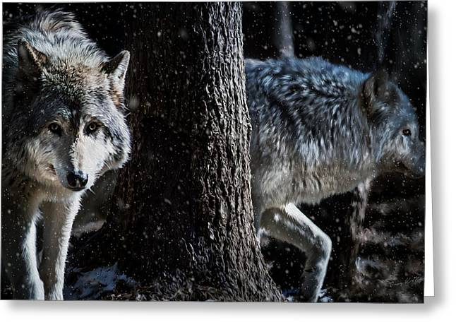 Timber Wolves In The Snow Greeting Card by Tracy Munson