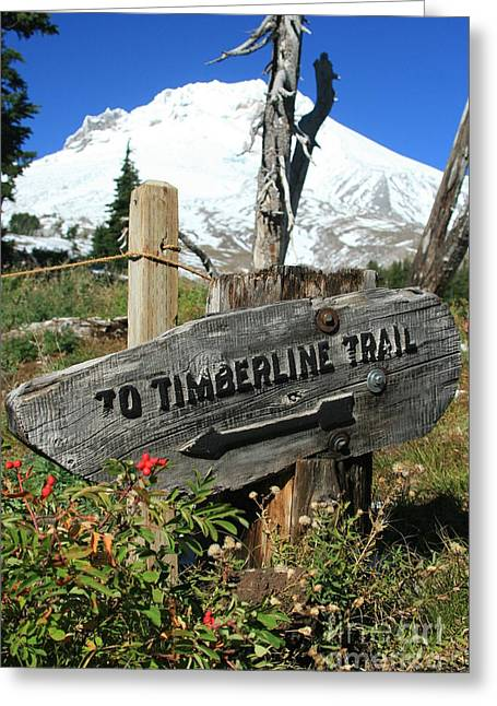 Timberline Trail Greeting Card by Cari Gesch