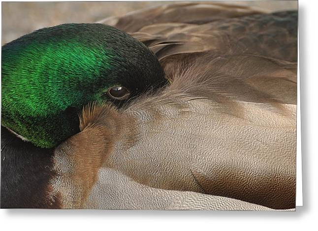 Greeting Card featuring the photograph Time For A Nap by Sabine Edrissi
