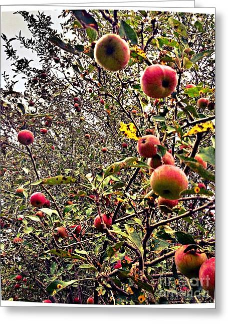 Time To Pick The Apples Greeting Card by Garren Zanker