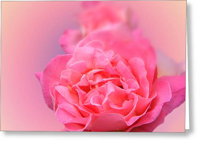 Timeless Beauty Greeting Card by Tammy Garner