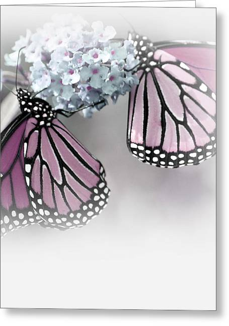 Timeless Beauty Greeting Card by The Art Of Marilyn Ridoutt-Greene