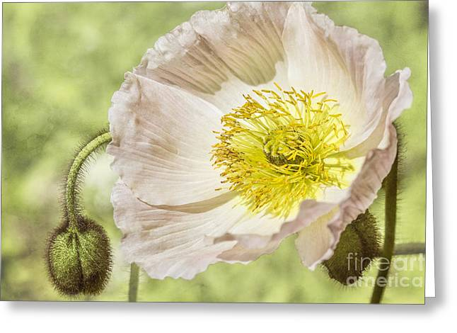 Timeless Memories Greeting Card by Linda Lees