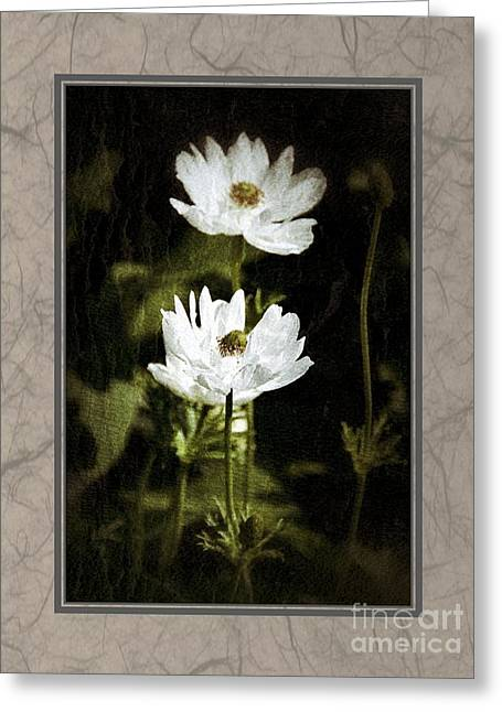 Greeting Card featuring the photograph Timeless Two by Darla Wood