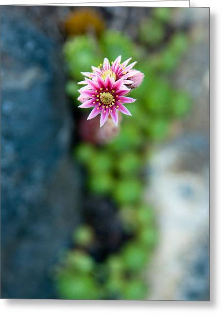 Greeting Card featuring the photograph Tiny Blossom by Erin Kohlenberg