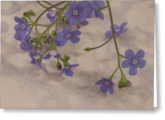 Greeting Card featuring the photograph Tiny Blue by Sandra Foster
