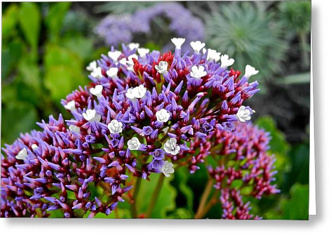 Tiny Flowers On A Beach Plant Greeting Card by Kirsten Giving