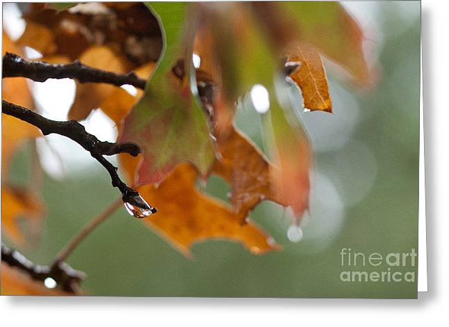 Tiny Leaf Greeting Card by Barbara Shallue