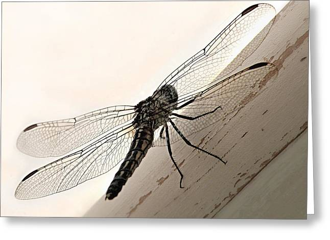 Tiny Magnificence  Greeting Card