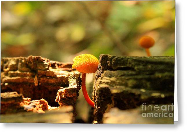 Tiny Mushroom Greeting Card