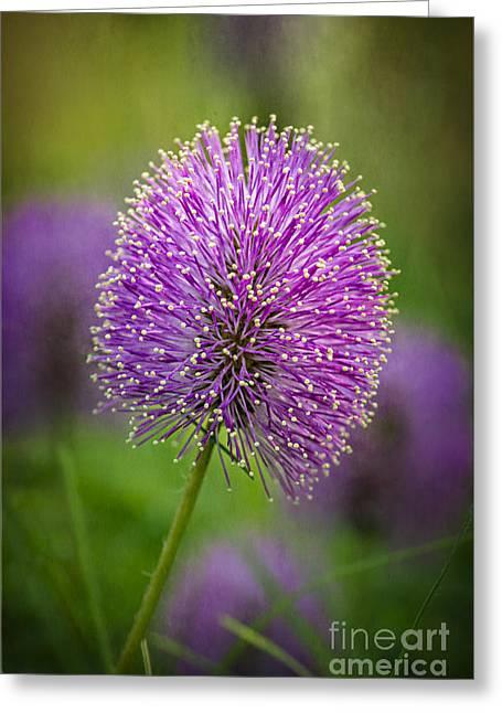 Tiny Purple Wildflower II Greeting Card by Tamyra Ayles