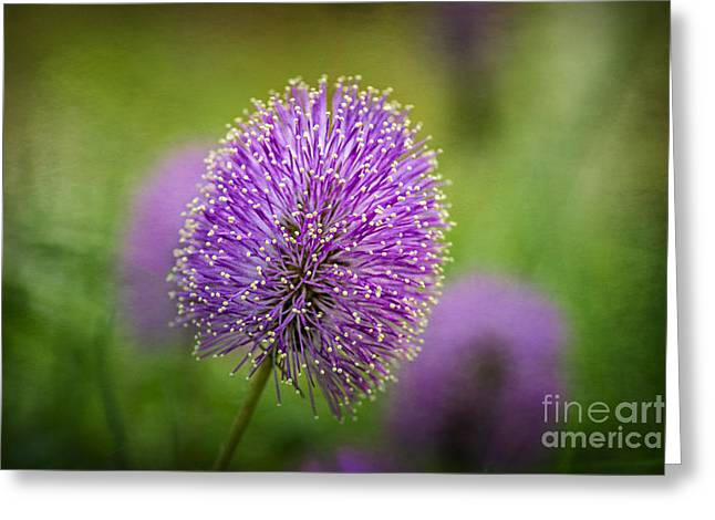 Tiny Purple Wildflower Greeting Card by Tamyra Ayles