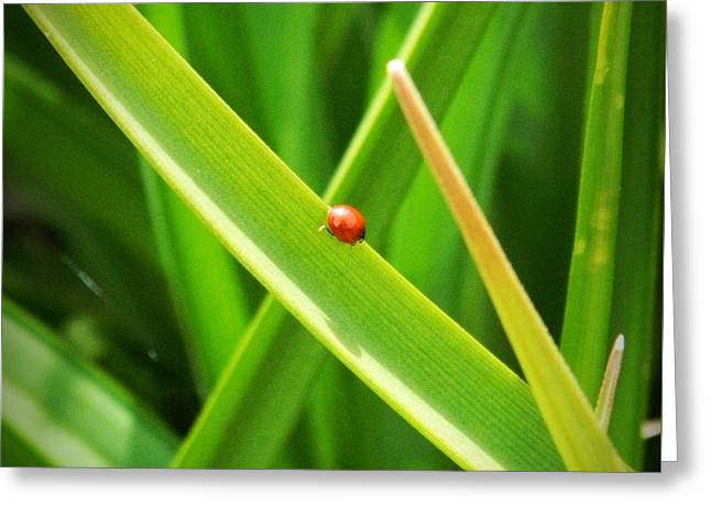 Tiny Red Ladybug In A Sea Of Green Greeting Card
