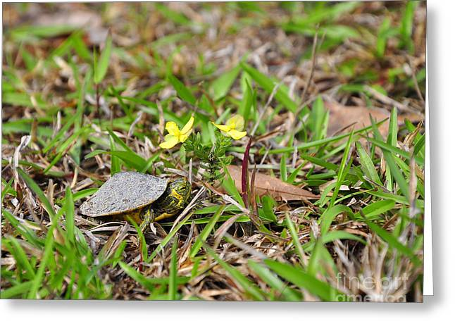 Tiny Turtle Greeting Card by Al Powell Photography USA