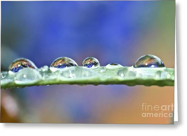 Tiny Waterworld And A Leaf Greeting Card by Heiko Koehrer-Wagner