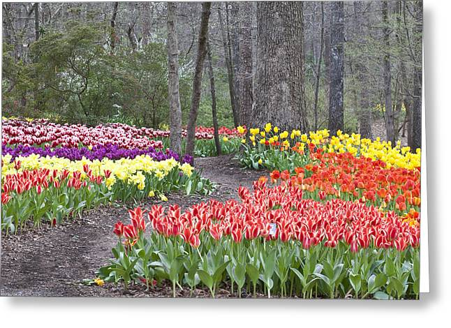 Greeting Card featuring the photograph Tiptoe Thru The Tulips by Robert Camp