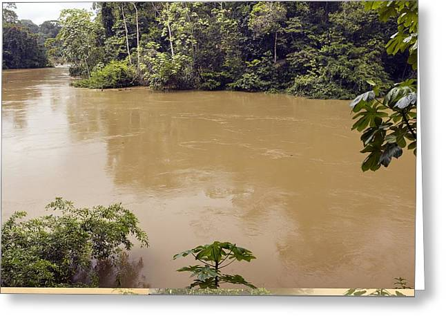 Tiputini River, Ecuador Greeting Card by Science Photo Library