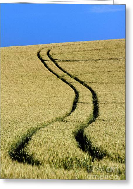 Tire Tracks In A Wheat Field. Auvergne. France. Greeting Card