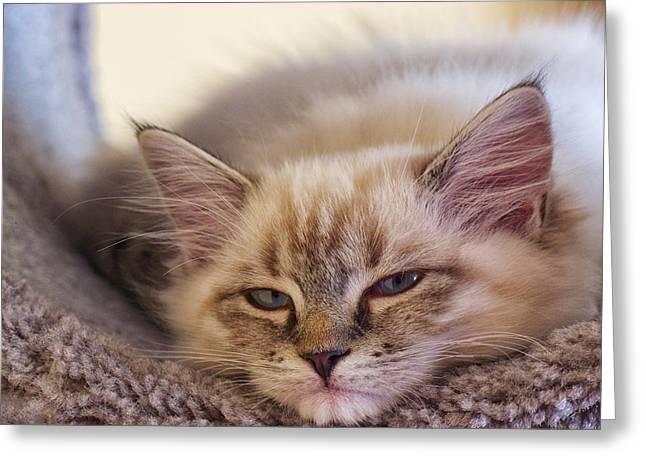 Tired Kitten Greeting Card