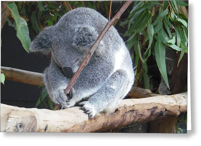 Tired Koala Bear With Stick Greeting Card
