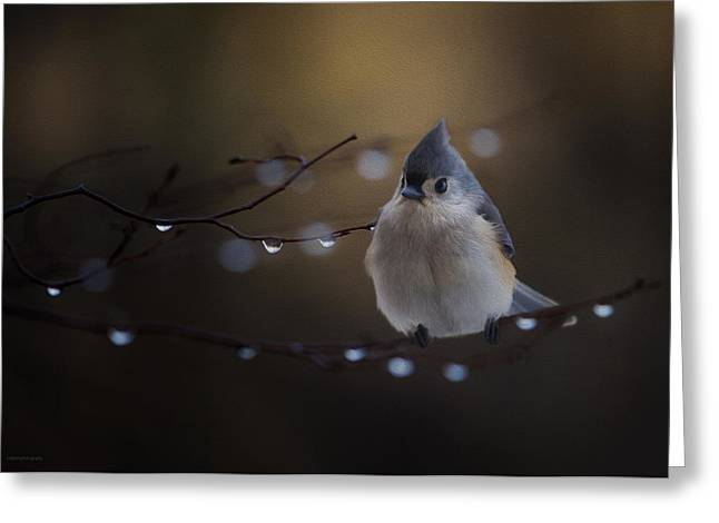 Titmouse Greeting Card by Ron Jones
