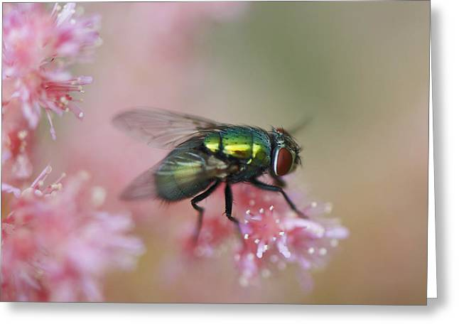 To Be A Fly On A Wall Greeting Card by Julie Smith