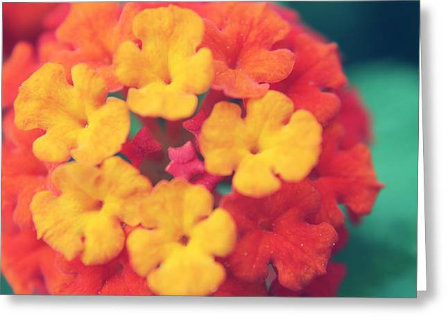 To Make You Happy Greeting Card by Laurie Search