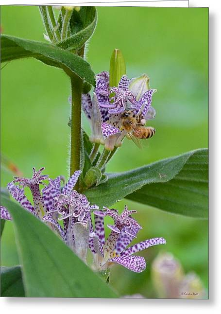Toad Lily And Hover Fly Greeting Card