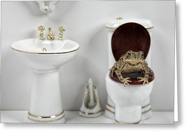 Toad Stool Greeting Card