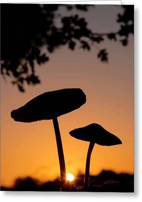 Toadstools At Sunset Greeting Card