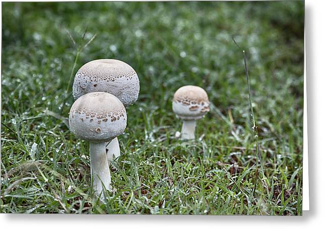 Toadstools V9 Greeting Card by Douglas Barnard