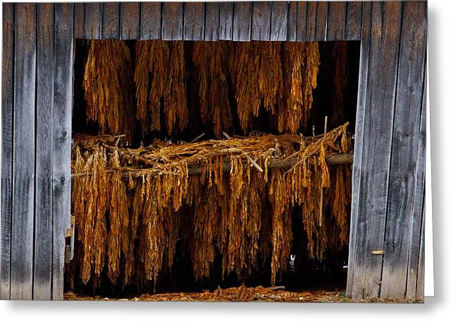 Tobacco Barn Greeting Card by Dale  Gurvis