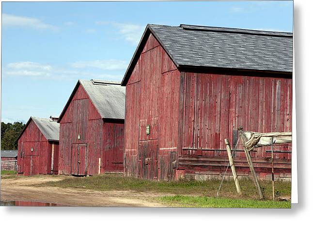 Tobacco Barns In Windsor Connecticut Greeting Card
