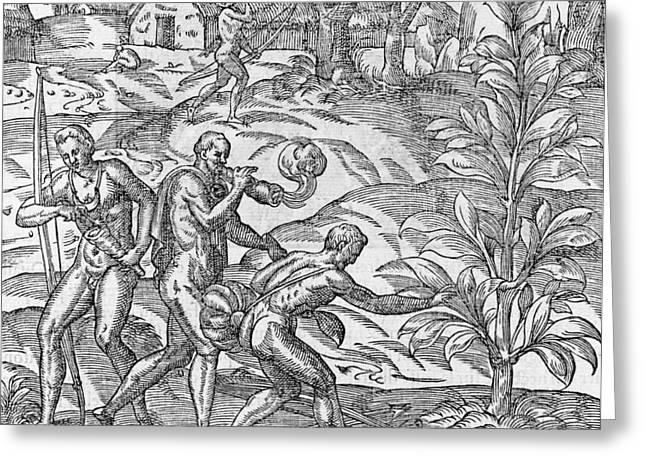 Tobacco Cultivation, 16th Century Greeting Card by Science Photo Library