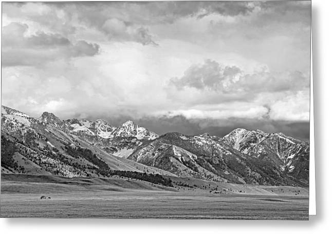 Tobacco Root Mountains Montana Black And White Greeting Card by Jennie Marie Schell