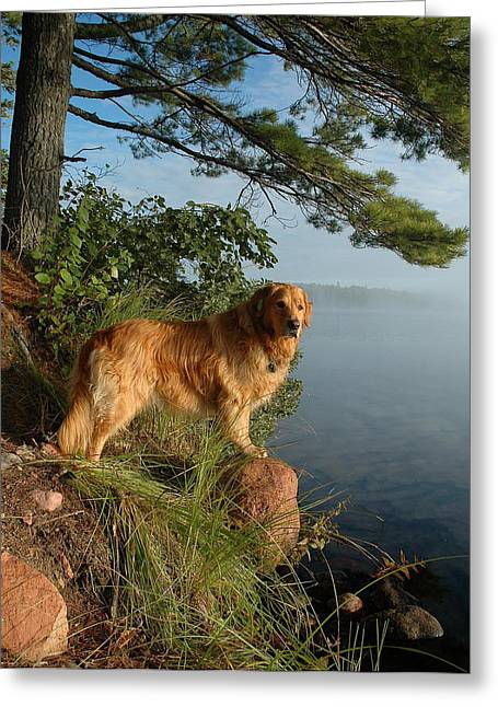 Toby On Point  Greeting Card by Sandra Updyke