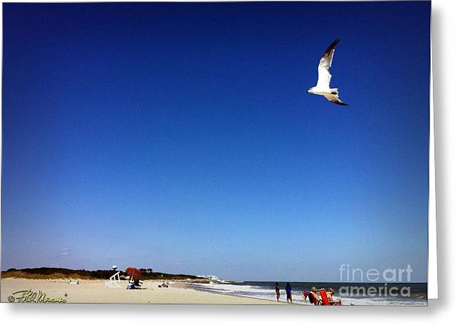 Greeting Card featuring the photograph Today I Will Soar Like A Bird by Phil Mancuso