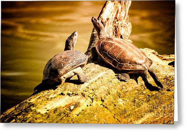 Together We Greeting Card by Venura Herath
