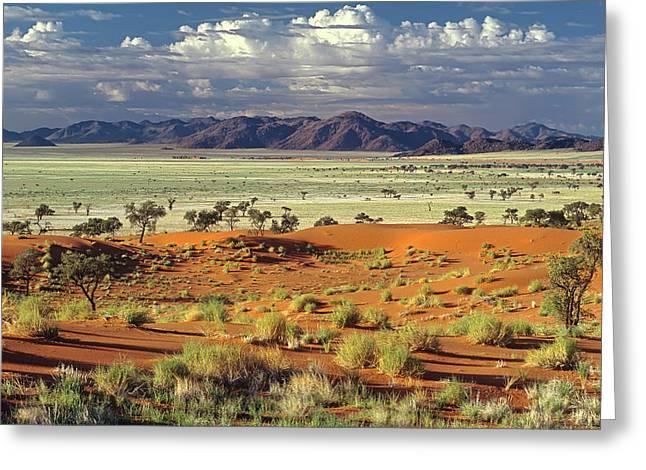 Tok Tokkie Desert Greeting Card