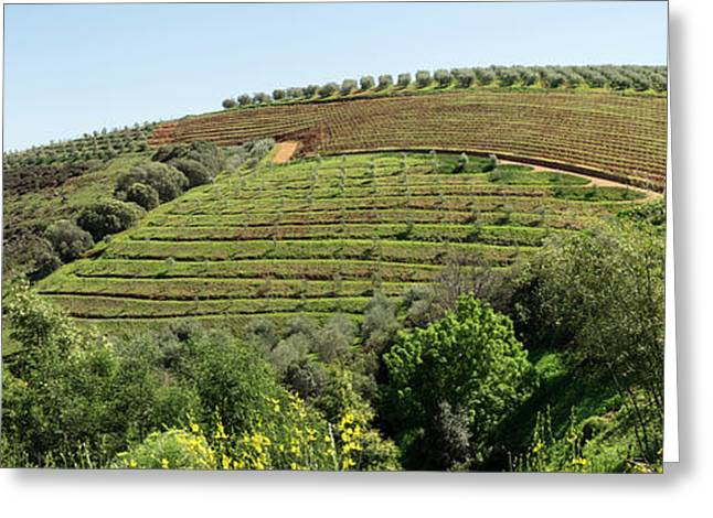 Tokara Vineyard, Delaire Graff Estate Greeting Card