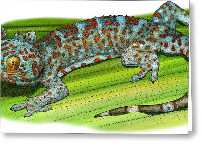 Tokay Gecko Greeting Card by Roger Hall