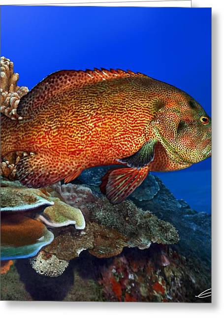 Tomato Grouper Greeting Card by Owen Bell