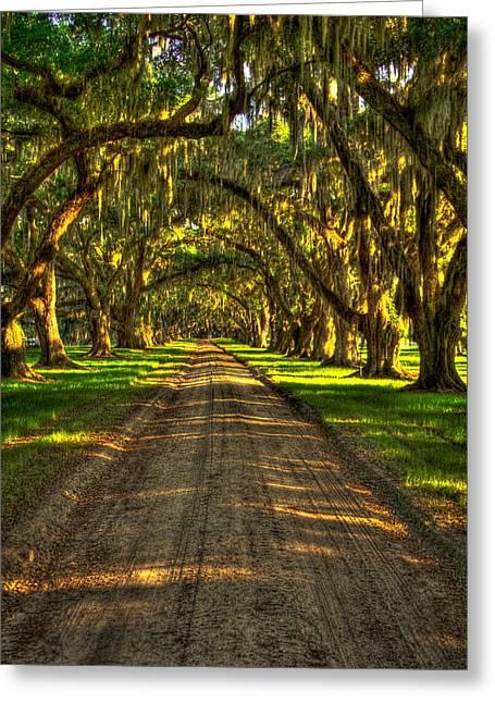 Live Oaks Of Tomotley Plantation Greeting Card by Reid Callaway