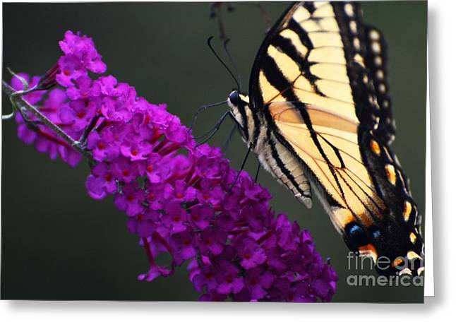 Greeting Card featuring the photograph Too Close For Comfort by Judy Wolinsky