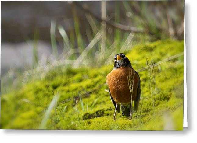 Too Many Worms Greeting Card by Belinda Greb