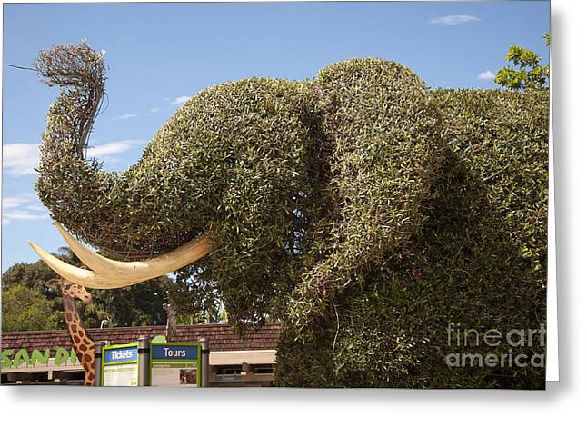 Topiary Elephant Greeting Card