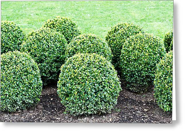 Topiary Plants Greeting Card