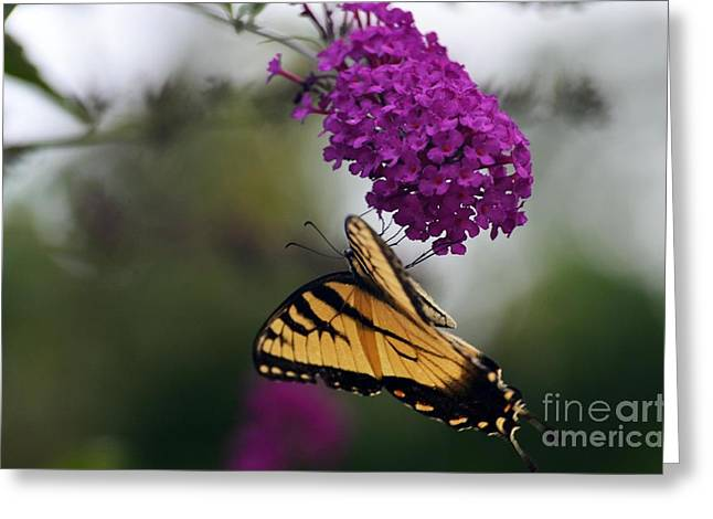 Greeting Card featuring the photograph Topsy Turvy by Judy Wolinsky