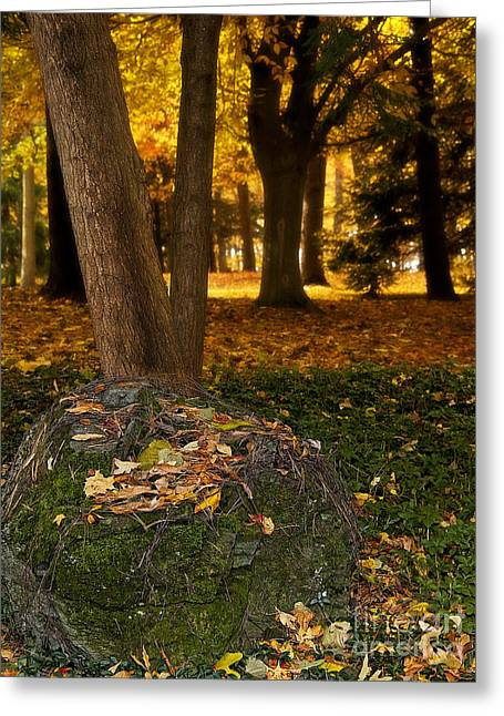 Torch Of Autumn Greeting Card by Lee Craig